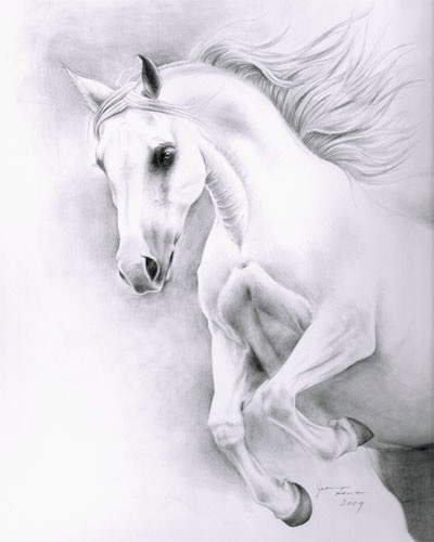 Graphite pencil portrait of gray Arabian mare.