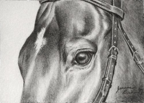 "An ACEO or ""Artist Trading Card"" size (2.5 x 3.5 inch) graphite pencil drawing of hunter jumper ""Captain""."