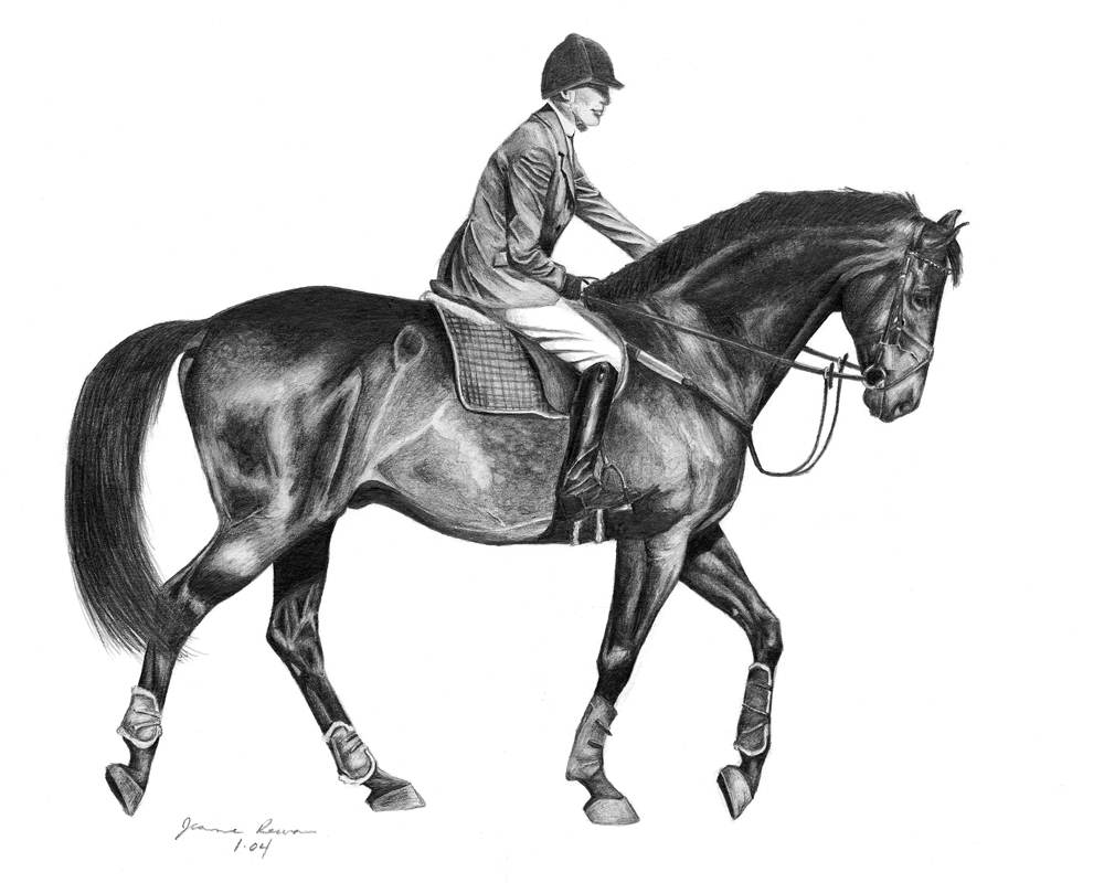 Graphite pencil drawing of a jumper warmblood and rider after a great ride.