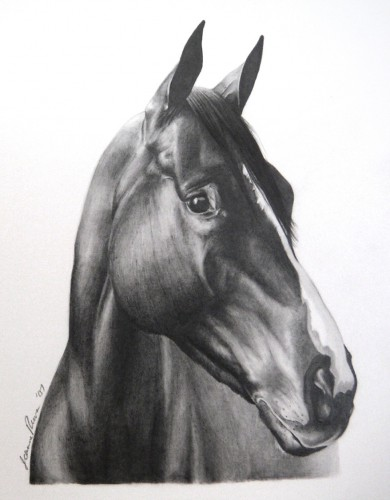 Graphite pencil drawing portrait of Rocky, a Thoroughbred gelding.