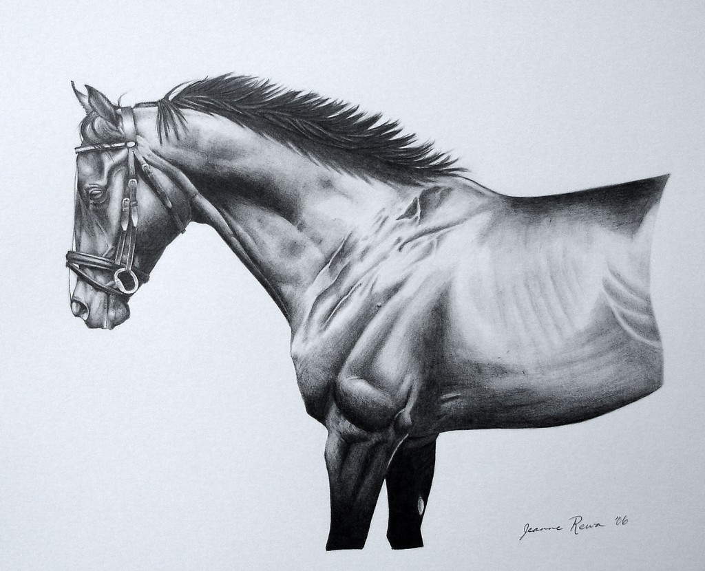 Graphite pencil portrait of thoroughbred gelding Rocky.
