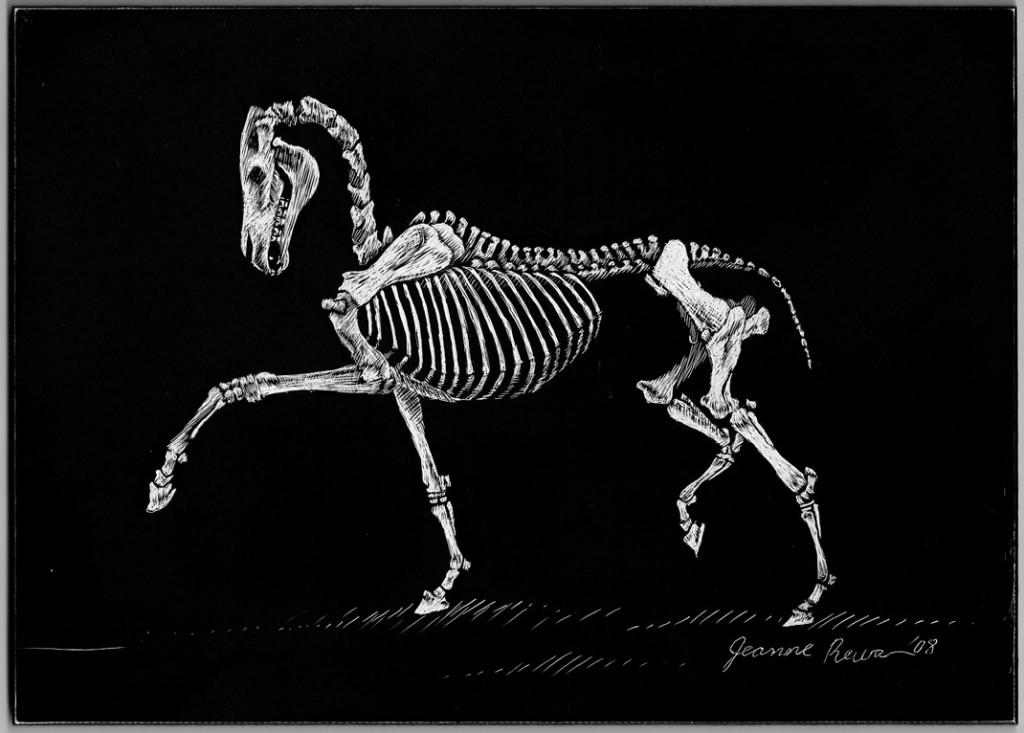Scratchboard sketch of a horse skeleton in an extended trot.
