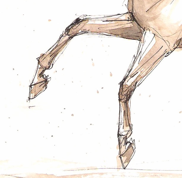 Detail from watercolor and ink sketch of a warmblood dressage horse performing a flying lead change.