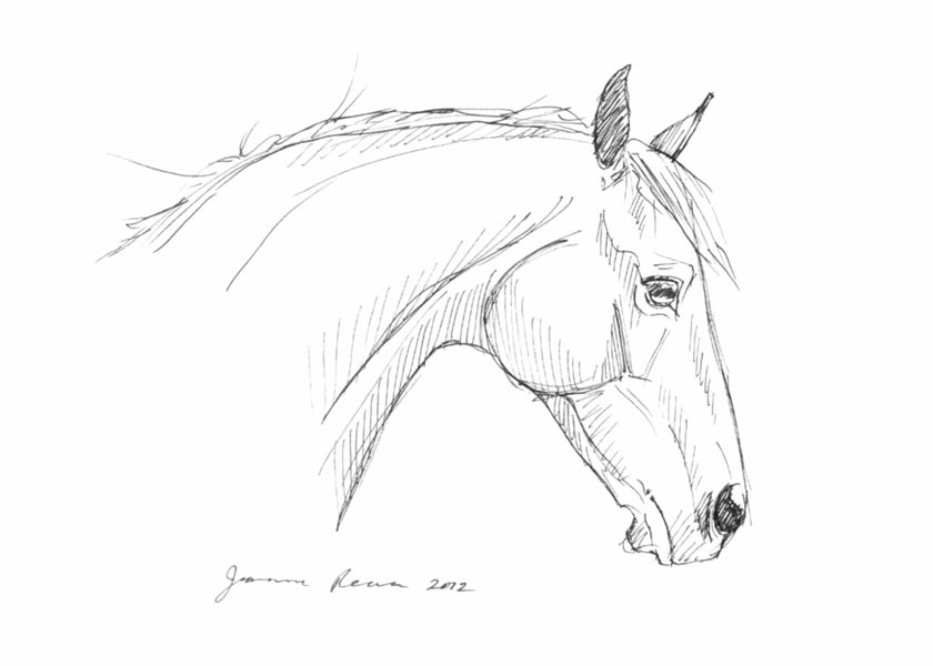 Pen and ink head study sketch of an attentive horse.