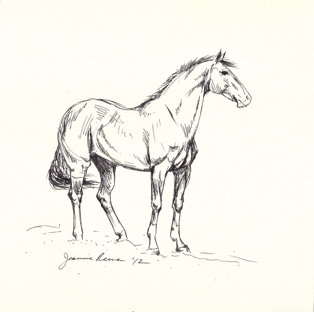 Ink sketch of thoroughbred with tall socks.